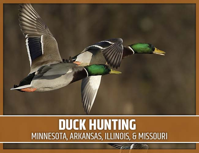 Premier Flight Guide Service Duck Hunting