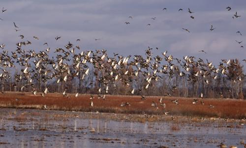 Arkansas Duck Guide Service Arkansas Duck Hunting With