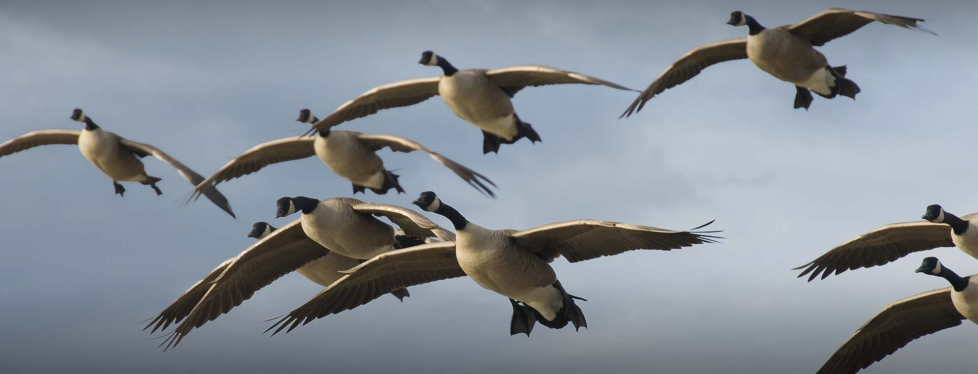 Guided Goose Hunting Packages