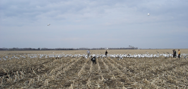 Motion Decoys For Snow Goose Hunting